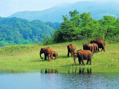 Periyar Wild Life Sanctuary & Thekkady
