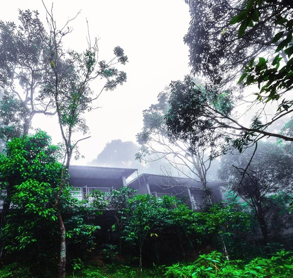 wayanad wild resort